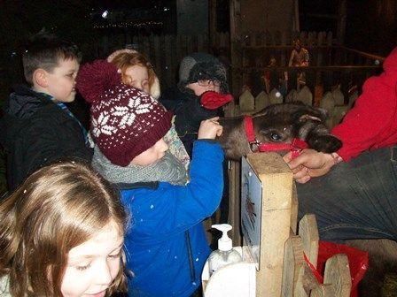 Christmas-Tree-Farm-Photo-7