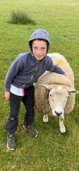 Coen-and-sheep